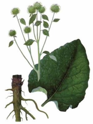 Plante medicinale în tratamentul artrozei artrite, Account Options