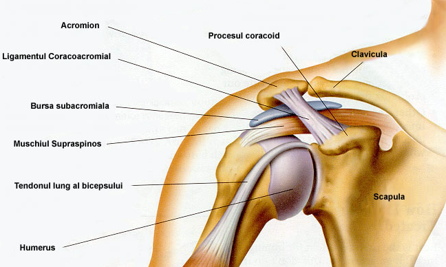 Artroza artrita tratamentul articulațiilor umărului - Artroza umărului (omartroza)