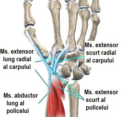 inflamația ligamentului la încheietura mâinii)
