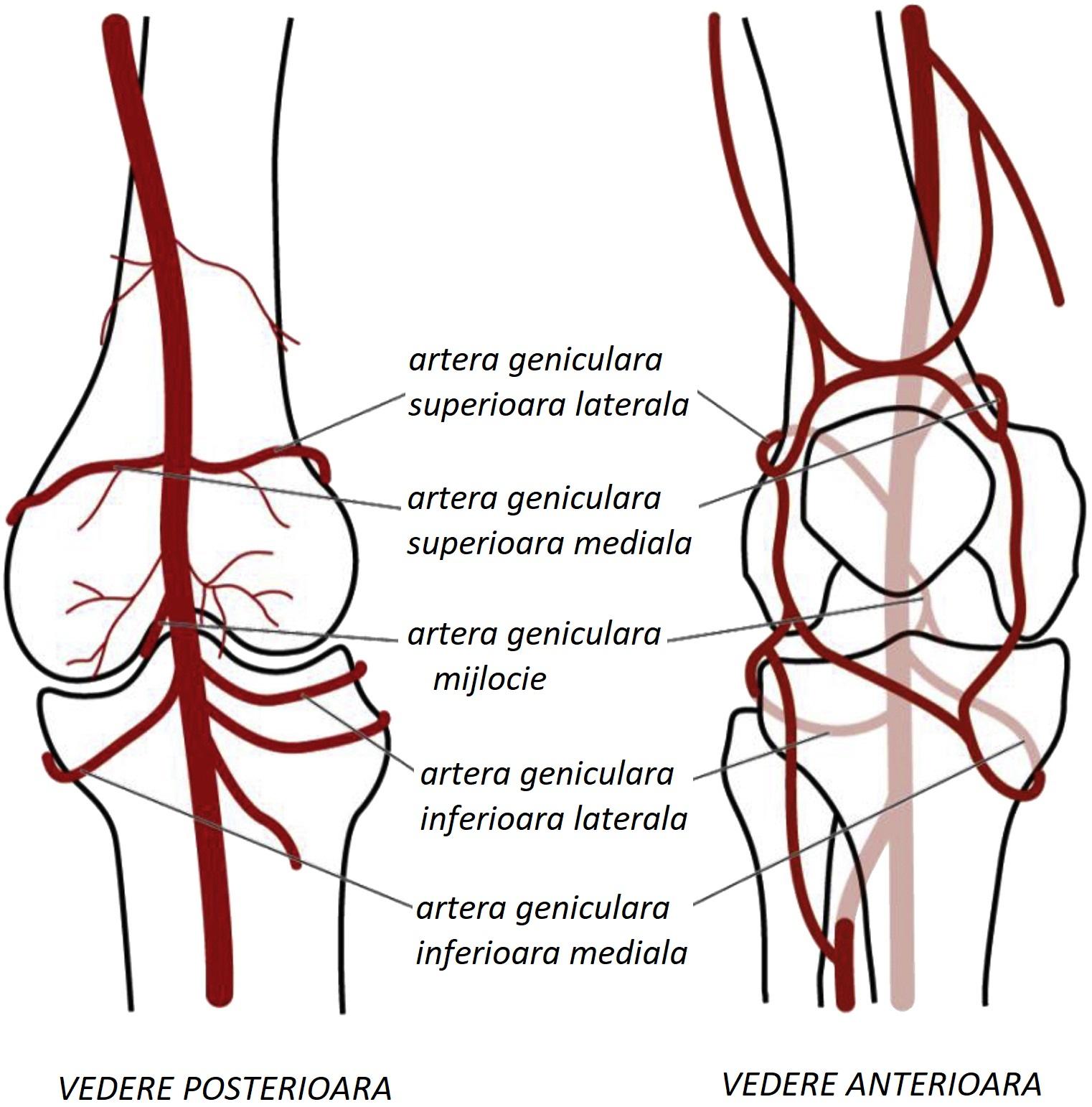 tratăm vasele articulației genunchiului)