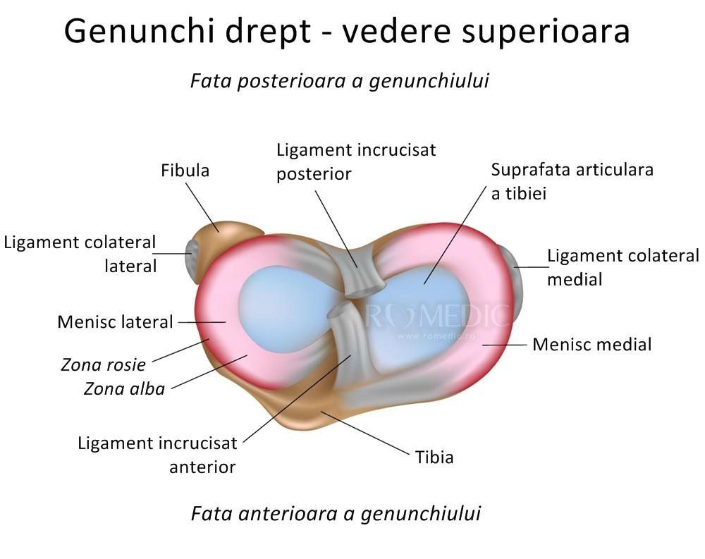 de ce se creg articulațiile genunchiului