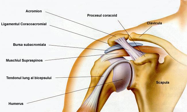 edem cerebral în articulația umărului