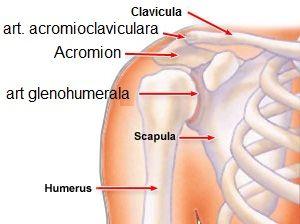 tratamentul simptomelor articulațiilor umărului