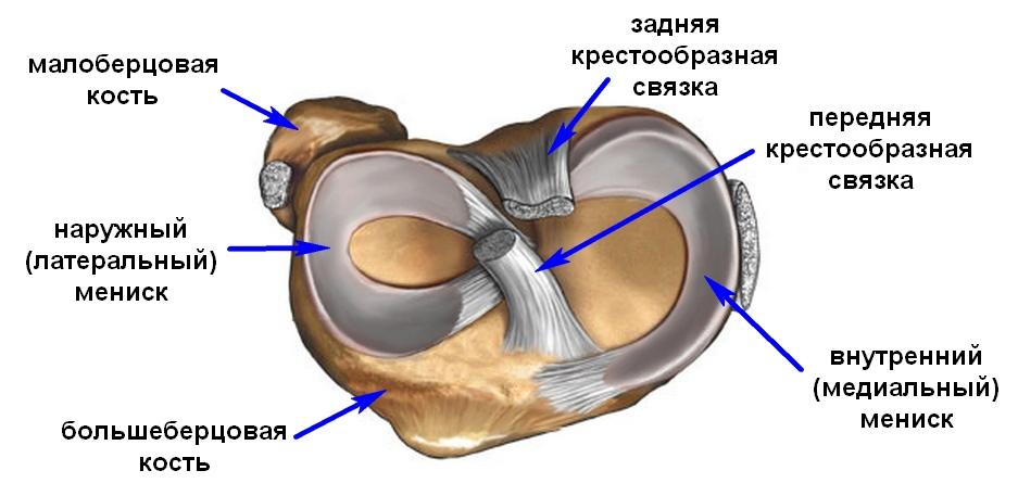 deteriorarea degenerativă a meniscului intern al articulației genunchiului)