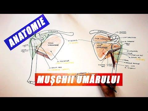 cum se tratează articulațiile din articulația șoldului