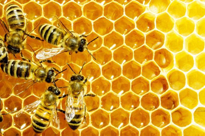 venin de albine în tratamentul artrozei)