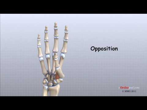 cum să tratezi creșterile pe articulațiile degetelor cum se tratează durerea în osteochondroza articulațiilor