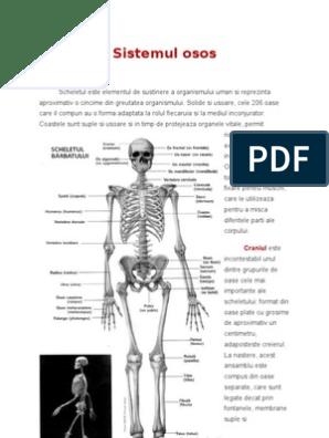 boli ale sistemului scheletului și articulațiilor)