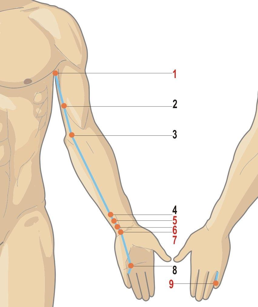 anatomie dureri de cot dureri și articulații ale umerilor