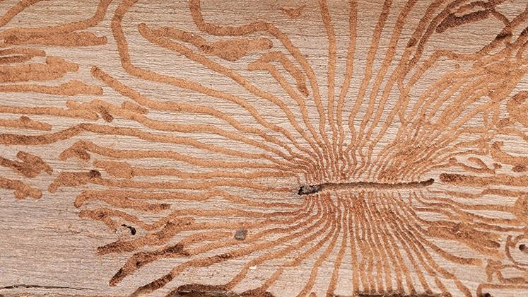 tratamentul artrozei cu lemn de lemn dureri de șold din interior