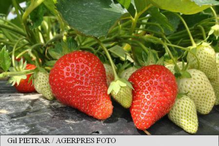 căpșuni pentru dureri articulare prețurile tratamentului pentru luxația umărului
