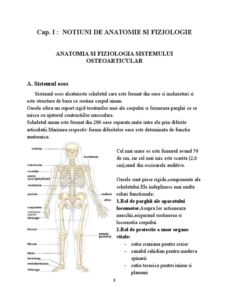 Os (anatomie)