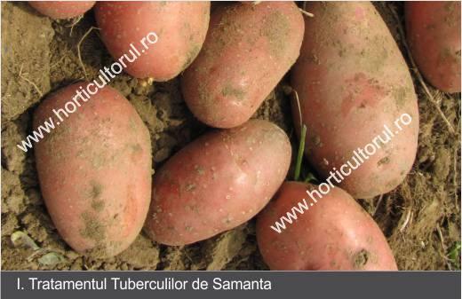 Tratamentul artrozei articulației cotului cu cartofi