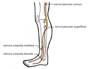 medicamente cum să trateze durerile de genunchi