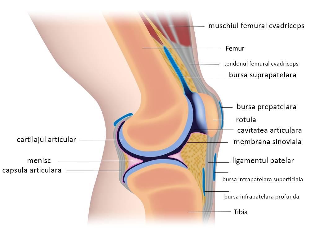 creste pe articulatiile genunchiului)