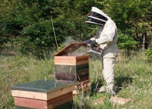 articulații de tratament apicultor