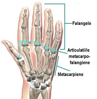 durere la nivelul articulațiilor interfalangiene)