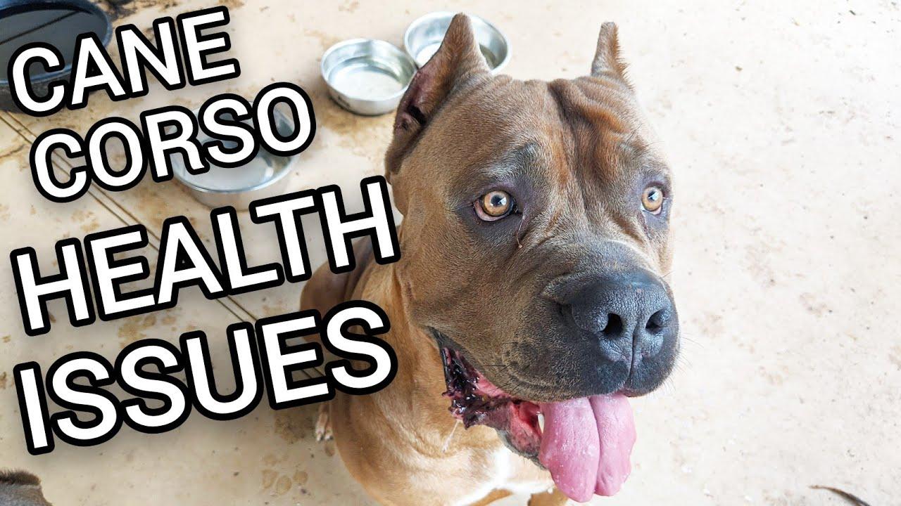 Bolile de picioare la câini. Totul despre tratarea problemelor legate de oase și articulații