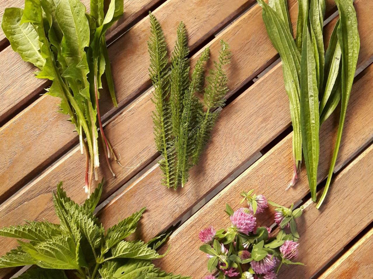 12 plante medicinale pentru tratamentul articulațiilor)