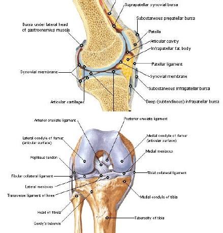 tratamentul articular hialuronic unguent pentru ligamente și articulații la genunchi