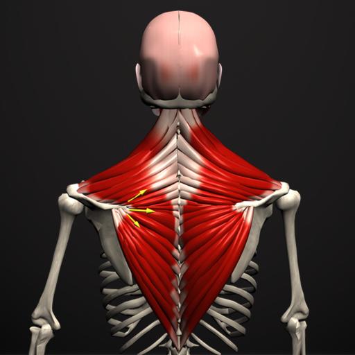 articulațiile musculare doare ce este)