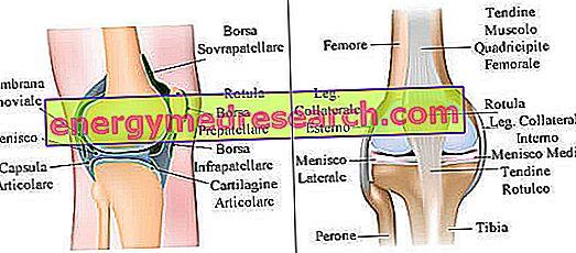 inflamația genunchiului la interior)