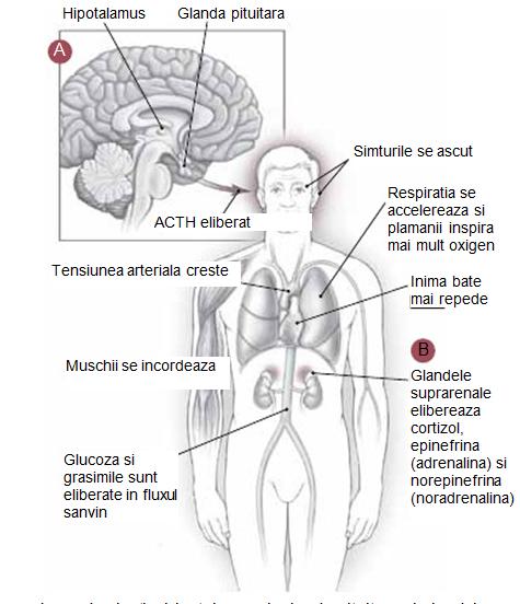 poate răni articulațiile în urma stresului