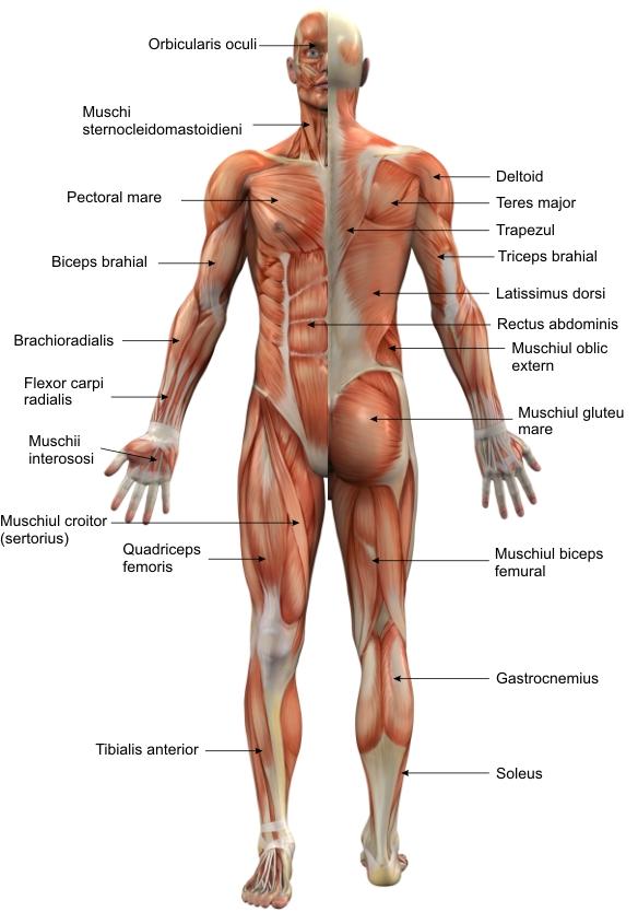 спортивные добавки хондроитин глюкозамин dureri la nivelul încheieturilor și umflături