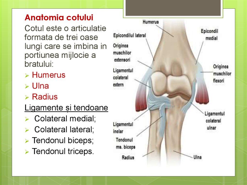 inflamația musculară în articulația cotului)