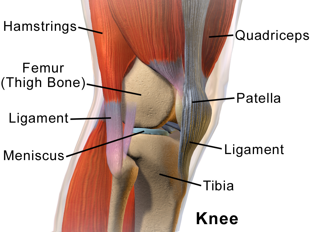 pentru a menține articulațiile genunchiului
