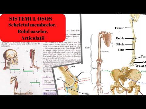 Troxevasină pentru durere în articulația genunchiului. Te-ar putea interesa si