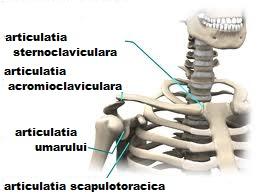 deteriorarea articulației sternoclaviculare