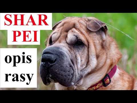 tratamentul artrozei în Sharpei)