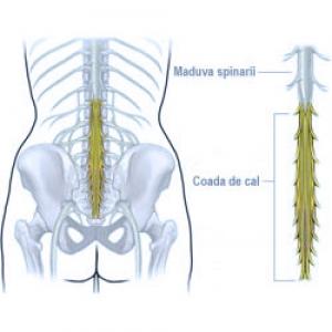 tratamentul articular al cozii de coadă