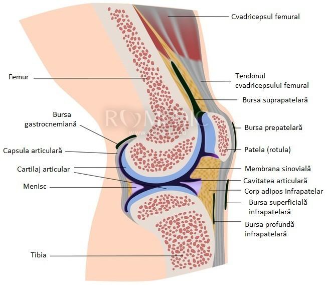 deteriorarea parțială a ligamentelor articulației genunchiului drept