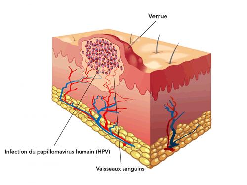 Top 5 vitamine pentru circulatia sangelui | blumenonline.ro