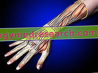 articulația degetelor mari durerea durerii în articulațiile umărului provoacă