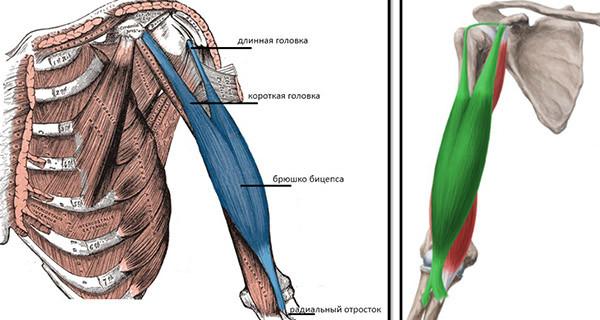 deteriorarea tendonului mușchiului supraspinat al articulației umărului