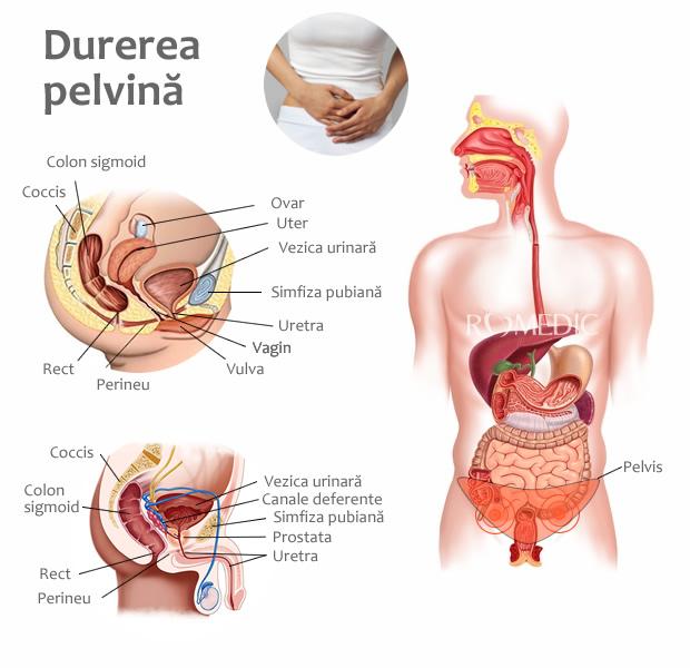 dureri la nivelul hipocondrului articular și drept