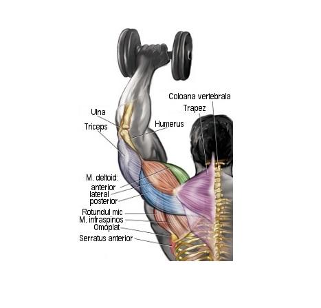 antrenament pentru durerea articulației umărului)