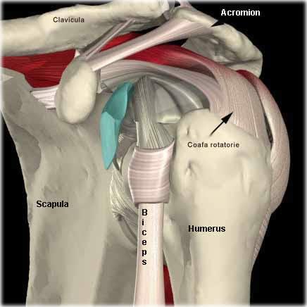 artroză cu bursită tratament la umărul stâng)