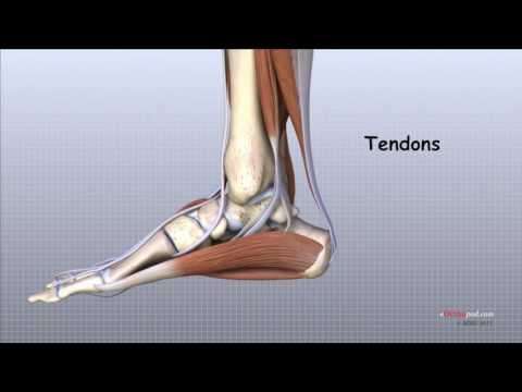 artroza deformantă a articulației gleznei stângi)