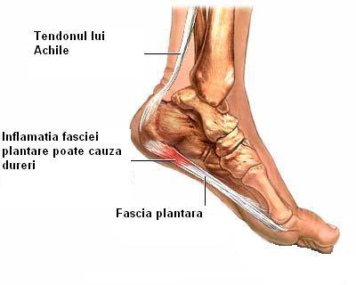 durere în articulațiile gleznei în timpul alergării)