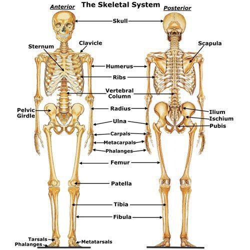boli ale sistemului scheletului și articulațiilor