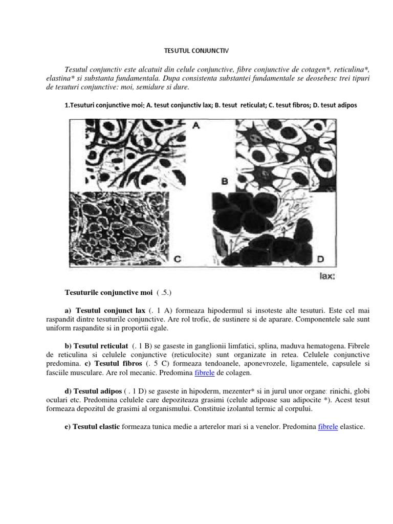 Regenerarea fiziologică și reparativă a țesutului conjunctiv - blumenonline.ro