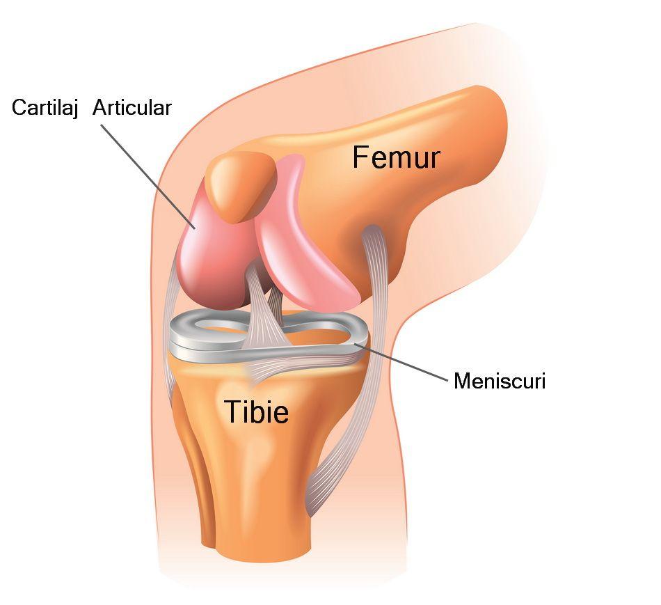 cartilajul articulației genunchiului este șters