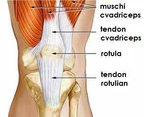 afectarea tendoanelor genunchiului