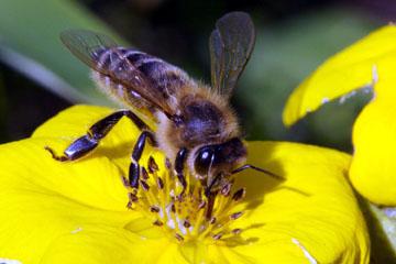 tratarea artrozei cu produse apicole