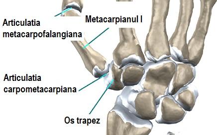 Traumatismele craniocerebrale si vertebromedulare by Negotei Elena - Issuu