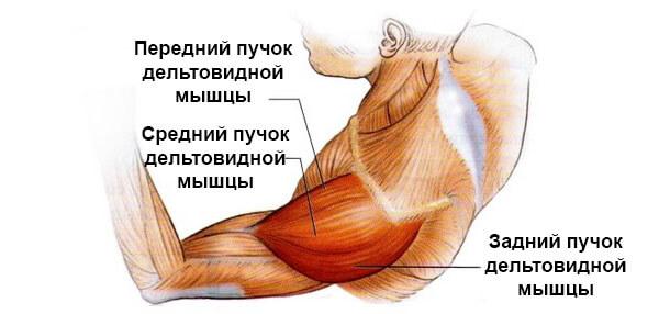 deteriorarea mușchiului de rotație a articulației umărului